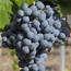 Carta de vins del Restaurant Can Suñé de Caldetes